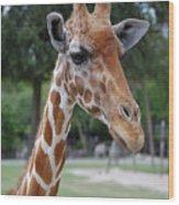 Giraffe Youth Wood Print