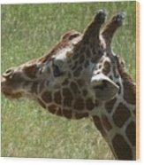 Giraffe's Head Wood Print