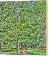Girl Uninterrupted In Central Park Wood Print