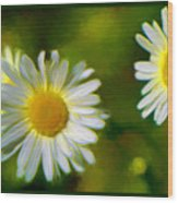 Give Me Daisy In Color Wood Print