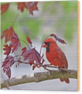 Give Me Shelter - Male Cardinal Wood Print