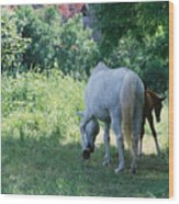 Giverny Mare And Foal Landscape Wood Print