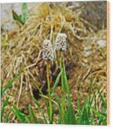 Glacial Wildflowers Wood Print