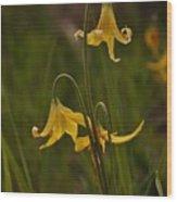 Glacier Lilly Wood Print