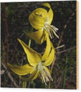 Glacier Lily 2 Wood Print