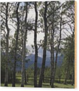 Glacier National Park Green Trees Mountains Wood Print