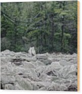 Glacier Rock 2 Wood Print