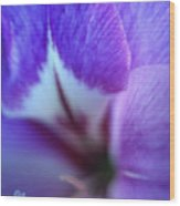 Gladiola Close-up Wood Print by Kathy Yates
