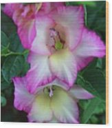 Gladiolas Blooming With Ripening Blueberries Wood Print
