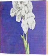Gladiolus 2 Wood Print