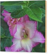 Gladys Blooms In A Blueberry Bush Wood Print