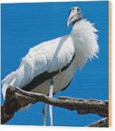 Glamorous Wood Stork Wood Print