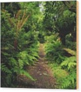 Glanleam, Co Kerry, Ireland Pathway Wood Print