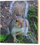 Glasgow Squirrel Wood Print