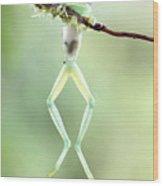 Glass Frog Wood Print