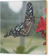 Glass Wing Butterfly Wood Print