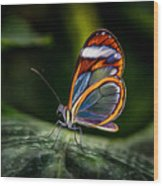 Glasswing Butterfly Iridescence  Wood Print