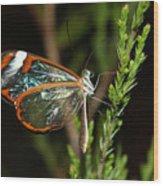 Glasswinged Butterfly Wood Print
