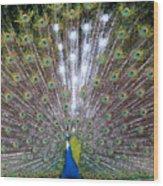 Glassy Peacock  Wood Print