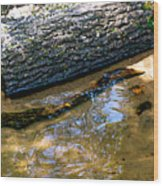 Glassy Water Wood Print