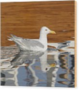 Glaucous-winged Gull Wood Print