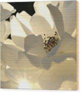 Gleaming White Wood Print