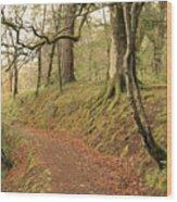 Glengarry Forest Scotland Wood Print