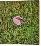 Gliding Spoonbill In Bayou Wood Print