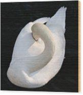 Gliding Swan Wood Print