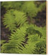 Glimmering Ferns Wood Print