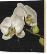 Glissoning Orchids Wood Print