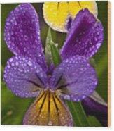 Glittered Wild Pansies Wood Print