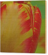 Globe Tulip Wood Print