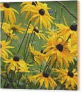 Gloriosa Daisies Wood Print