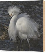Glorious Egret Wood Print