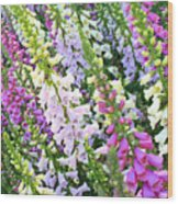 Glorious Foxgloves Wood Print