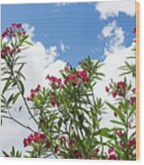 Glorious Fragrant Oleanders Reaching For The Sky Wood Print