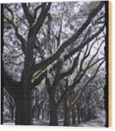 Glorious Live Oaks With Framing Wood Print