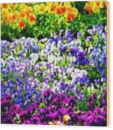 Glorious Pansies Wood Print