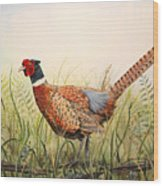 Glorious Pheasant-1 Wood Print