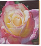 Glorious Pink Rose Wood Print