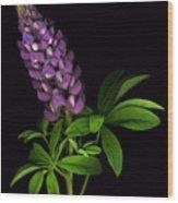 Glorious Purple Lupine Wood Print