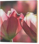 Glorious Spring Wood Print