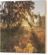 Glorious Sunrise At The Oak Tree Wood Print
