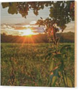 Glorious Sunset Wood Print