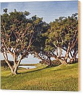 Glory In The Morning Pntb Wood Print