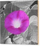 Glory Pink Wood Print