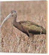 Glossy Ibis . 7d5045 Wood Print