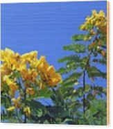 Glossy Shower Senna Tree Wood Print