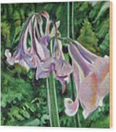 Glowing Amaryllis Wood Print